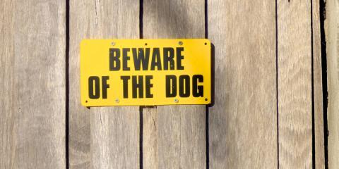 What Happens When a Dog Bite Victim Is Partially to Blame?, Delhi, Ohio