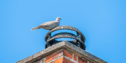 3 Pests That Can Get Into Your Chimney, Miami, Ohio