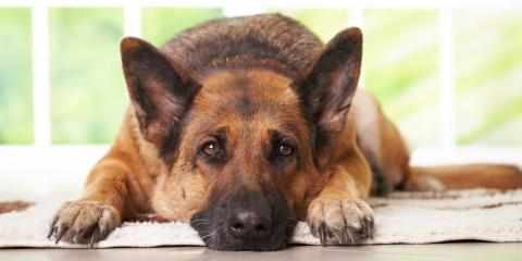 3 Signs of Old Age in Pets, Springfield, Ohio