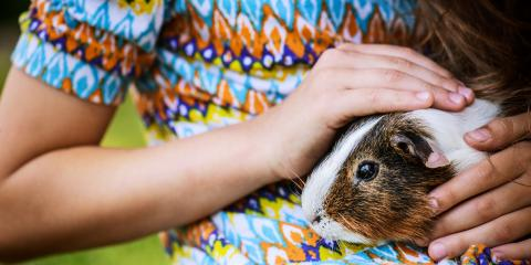 5 Common Health Problems All Guinea Pig Owners Should Know About, Cincinnati, Ohio