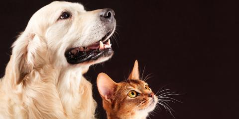 Pet Burial Services Offer the Respect & Dignity Your Pet Deserves , Springfield, Ohio