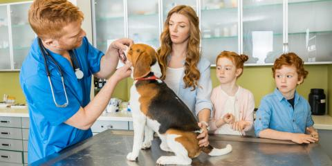 Veterinarians Share Advice for Preparing for Pet Surgery & Recovery, Montgomery, Ohio