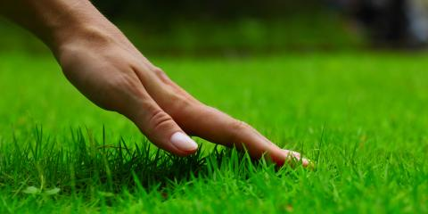 The Pros & Cons of Grass Seed vs. Sod Installation, Anderson, Ohio