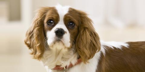Pet Wellness: Top 5 Foods Your Dog Should NEVER Eat, Springfield, Ohio