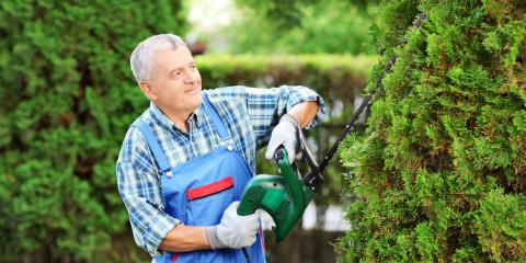 4 Common Tree Trimming Mistakes Homeowners Make, Cincinnati, Ohio