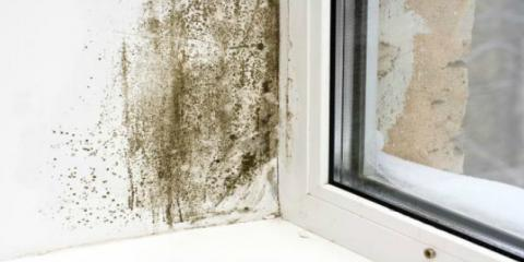 Experiencing These Symptoms in Your Cincinnati Home? You Might Need Mold Remediation, Forest Park, Ohio