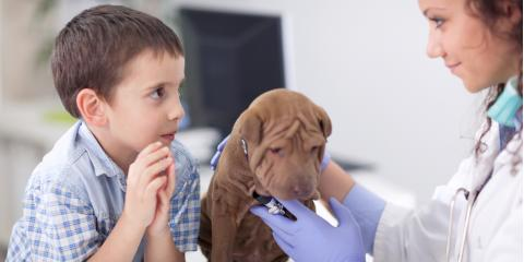What to Expect At Your Puppy's First Vet Appointment, Montgomery, Ohio