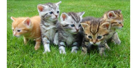 Cincinnati's Best Veterinarians Explain the Importance of Pet Vaccinations, Springfield, Ohio