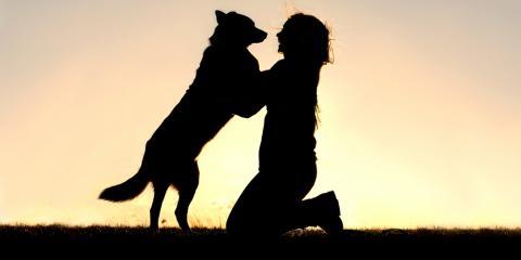 Cincinnati Veterinarians Share 3 Signs of Hip Dysplasia in Dogs, Sycamore, Ohio