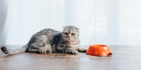 5 Reasons Cats May Stop Eating, Montgomery, Ohio