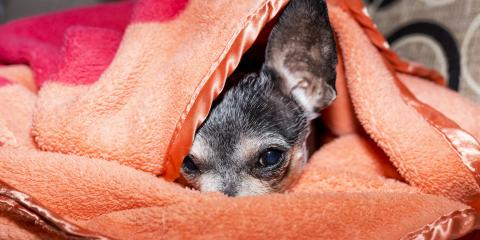 How Do I Know If My Dog Is Sick?, Sharonville, Ohio