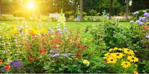 4 Types of Flowers Perfect for Your Summer Planting Project, Colerain, Ohio