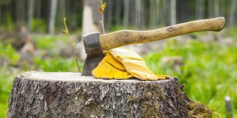 Stump Removal vs. Stump Grinding: Which Is Right for You?, Miamitown, Ohio