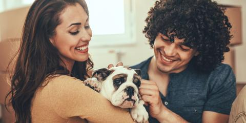 3 Tips for Bringing Home a New Dog or Cat, Clarksville, Arkansas