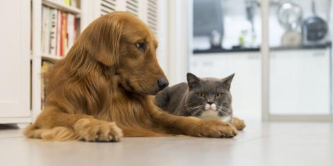 4 Critical Vaccines for Dogs & Cats, Clarksville, Arkansas