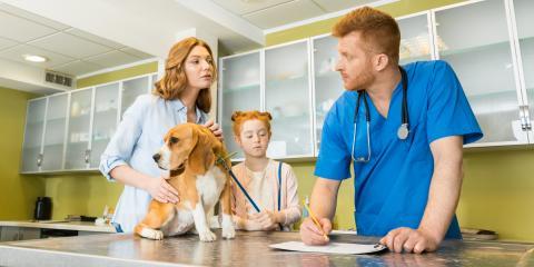 5 FAQ About Spay & Neuter Procedures, Clarksville, Arkansas