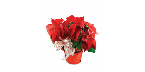 Easy Holiday Gifting, Brooklyn, New York