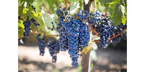 4 Amazing Health Benefits of Wine Consumption, Clayton, Georgia