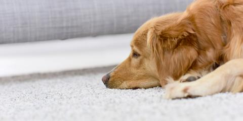 3 Ways to Get Pet Smells Out of Carpet, Cameron, Wisconsin