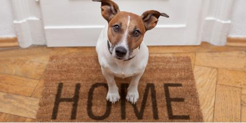 3 Benefits of Installing a Pet Door, Macedonia, Ohio