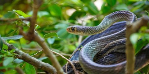 5 Ways to Keep Snakes Off of Your Property, Miami, Ohio