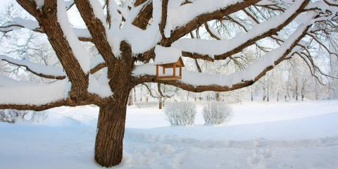 A Quick Guide to Winter Tree Wrapping , Miamitown, Ohio