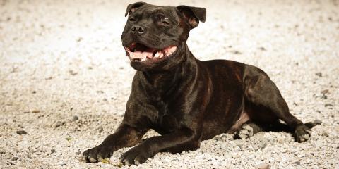3 Benefits of Installing Pea Gravel for Dog Owners, Cincinnati, Ohio
