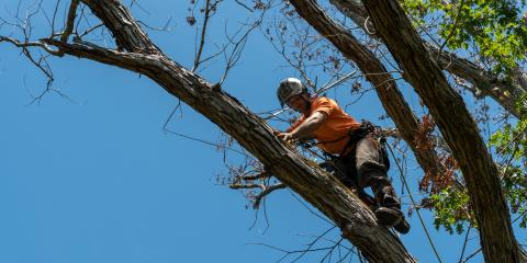 An Ohioan's Guide to Tree Care, Miamitown, Ohio