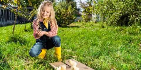What to Know About Raising Chickens, Clifton, Texas
