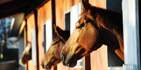 4 Ways to Combat Behavioral & Health Concerns in Older Horses, Clifton, Texas