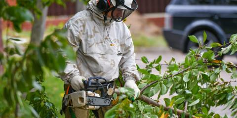Why Have an Arborist Inspect a Property Before Buying?, Providence, North Carolina