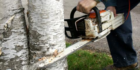 Why You Should Never Attempt DIY Tree Removal , Providence, North Carolina