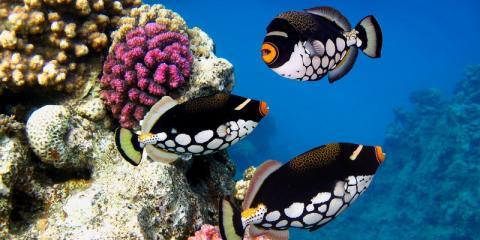 Gerber's Tropical Fish, Pet Stores, Services, Dayton, Ohio