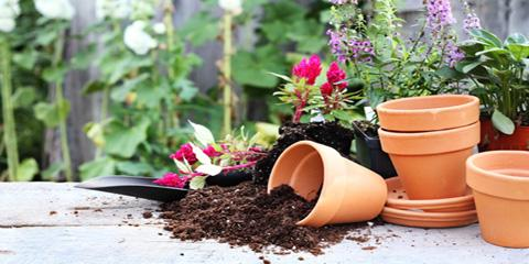 4 Ways Gardening Benefits Your Health, Aurora, Colorado