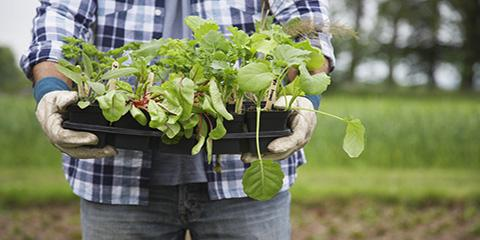 5 Money-Saving Gardening Tips , Pueblo, Colorado
