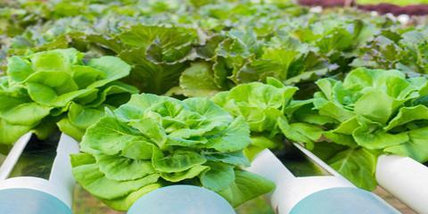 Hydroponic Gardening Tips for the 2017 Indoor Growing Season, Denver, Colorado
