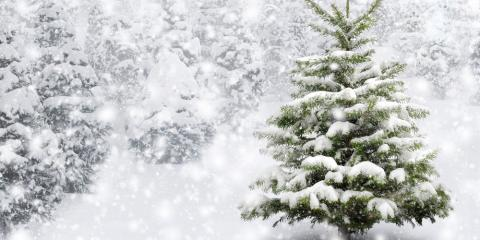 Denver Landscaping Pros Explain How to Protect Your Trees From Winter Storms, Denver, Colorado