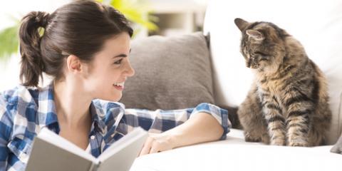 Veterinarian Explains Feline Viruses & How to Protect Your Cat, Denver, Colorado