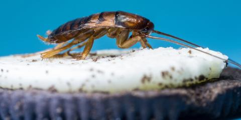 3 Signs You Need to Call a Cockroach Extermination Service, 2, Maryland