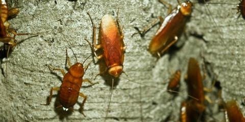 Cockroach Alert: 5 Pest Control Tips for Eliminating the Critters, Midway, Georgia