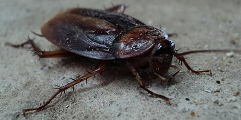 5 Surprising Cockroach Myths Busted by Dicku0026#039;s Fumigation Services Wailuku & 5 Surprising Cockroach Myths Busted by Dicku0027s Fumigation Services ...