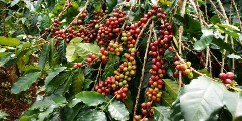 Good Sourcing, Great Coffee, South Coast, California