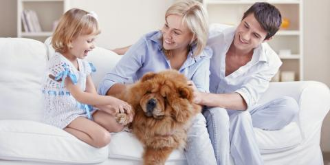 What Are the Negative Effects of Pet Dander?, Colfax, North Carolina