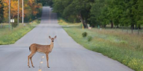A Guide to Avoiding Collisions With Deer & Other Wildlife, Waynesboro, Virginia