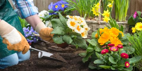 3 Plants to Include in Spring Gardening Projects, Fairfield, Connecticut