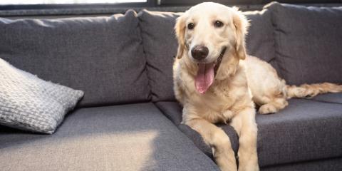 3 Decorating Ideas for a Pet-Friendly Home , Denver, Colorado