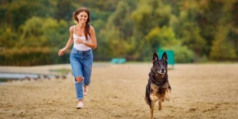 Your Veterinarian's Tips to Take Advantage of Spring Weather, Clarksville, Maryland