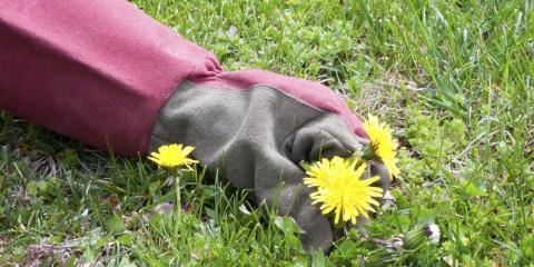 Property Maintenance: How to Prevent Lawn Diseases, Missouri, Missouri