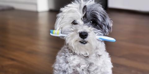 How to Provide Pet Dental Care, Columbia, Missouri