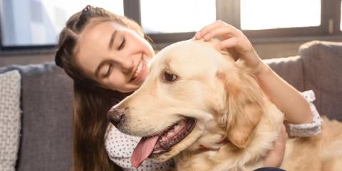 5 Tips for Caring for a Dog's Teeth, Columbia, Missouri